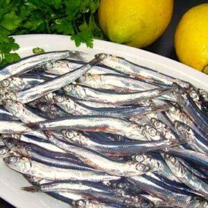 povero pesce ostia - 1